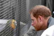 That Time a Parrot Got Cheeky with Prince Harry in the Caribbean