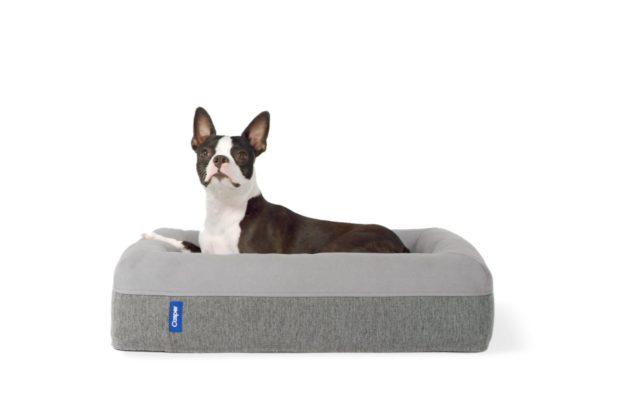 casper-dog-mattress-awake-poster
