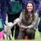 ARLINGHAM, GLOUCESTERSHIRE - MAY 03:  Catherine, Duchess of Cambridge feeds a lamb as she visits Author Michael Morpurgo's Farms for City Children on May 3, 2017 in Arlingham, Gloucestershire.  Farms for City Children is a charity which offers children in the UK a chance to live and work on a real farm for a week.  (Photo by Matt Cardy/Getty Images)