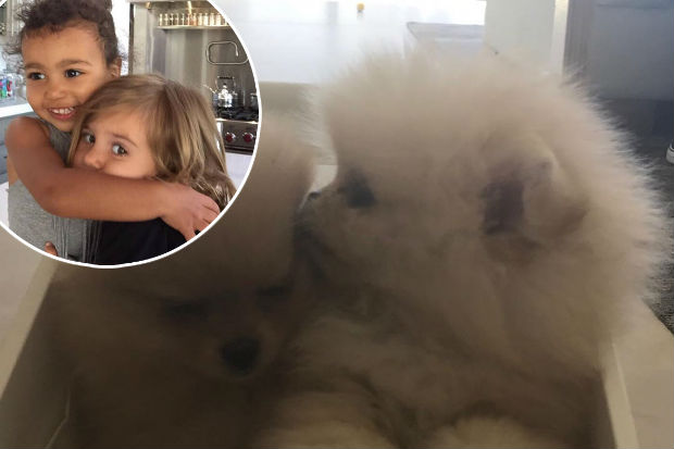 north west penelope disick Pomeranian sister puppies