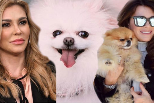 Yikes! 'RHOBH' Star Accused of Poisoning Her Dog