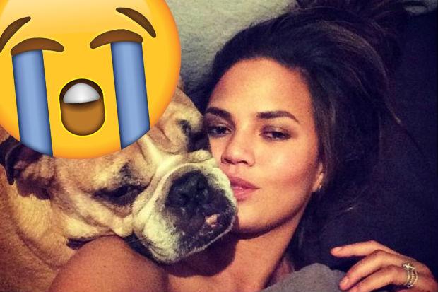 chrissy teigen dog puddy dead death crying sad emoji