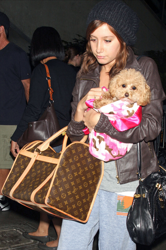 Puppy Loving Ashley Tisdale Should Be Smiling, But…