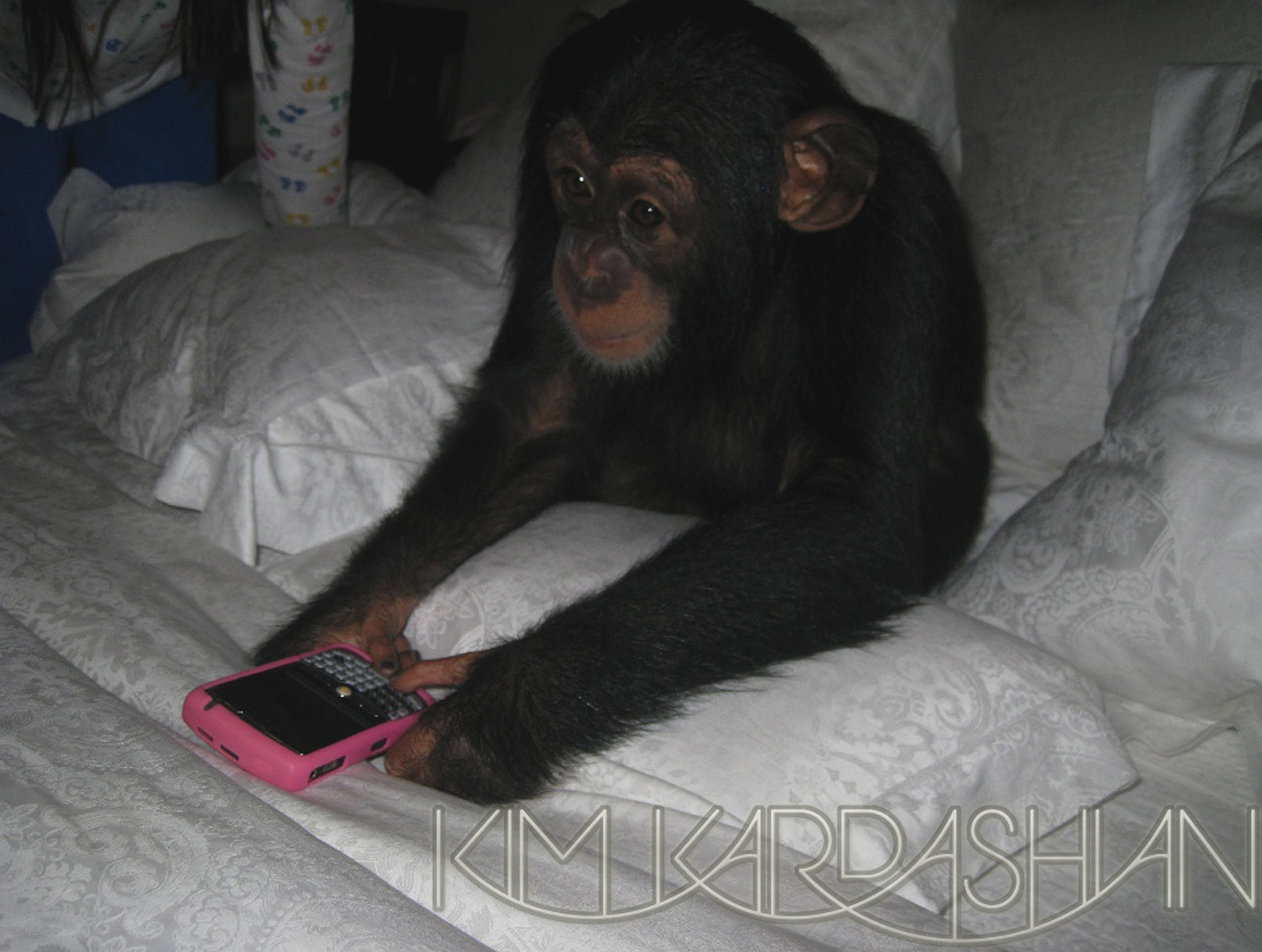 Not Everyone Wild About Kardashian Monkey Adoption