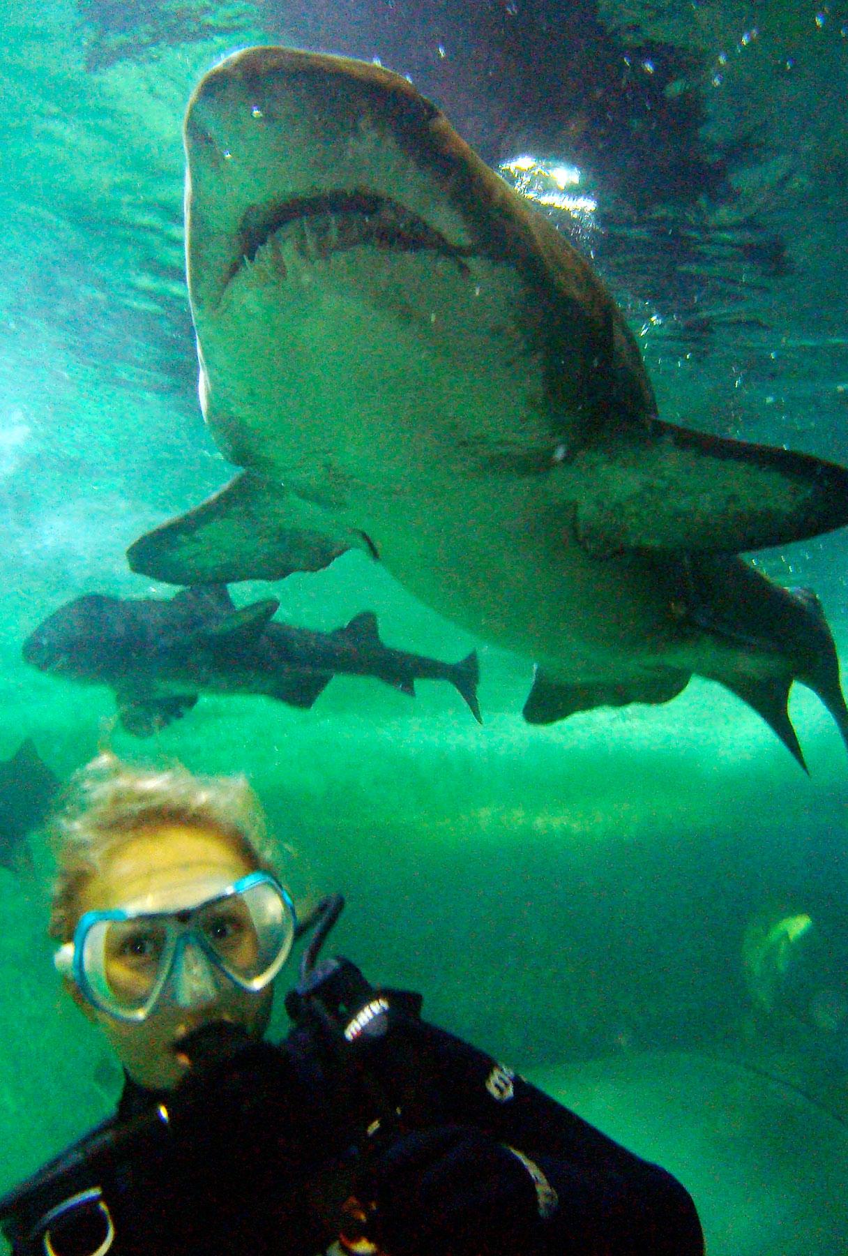Hayden Panettiere's Sharking Behavior