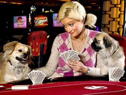 Holly Madison Playing Poker With Dogs: What Up With That?