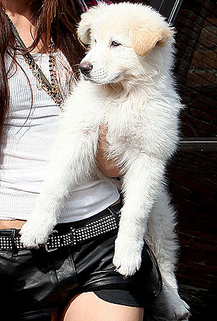 Guess the Celebrity Puppy Pals (PHOTOS)