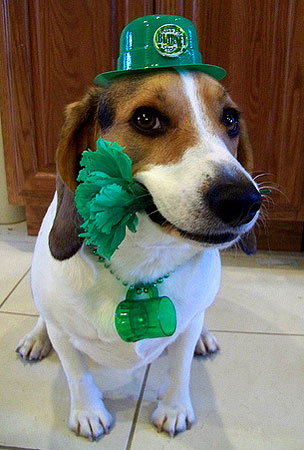 Today On The Internet: St. Patricks Day Nightmares