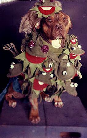 Hey, Dogs Dressed Like Lady GaGa! (PHOTOS)