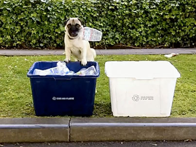 Today On The Internet: The Earth Day Pug
