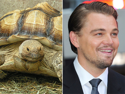 Leonardo DiCaprio's New Tortoise May Outlive Him