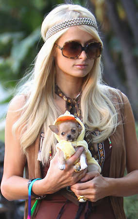 Paris Hilton's Dogs Get in Halloween Spirit (PHOTOS)